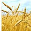 forrásteremtés ipari, mezőgazdasági teendőkre