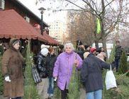 Zöld fenyőfa térítésmentesen rászorulóknak