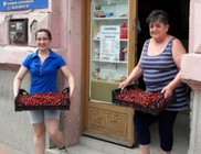Friss - ropogós cseresznyét osztottunk