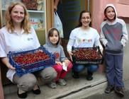 Gyümölcskommandó - meggyosztás rászorulóknak