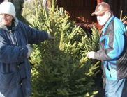 Kedvezményes fenyőfa rászorulóknak - fenyőt adtunk az ünnephez