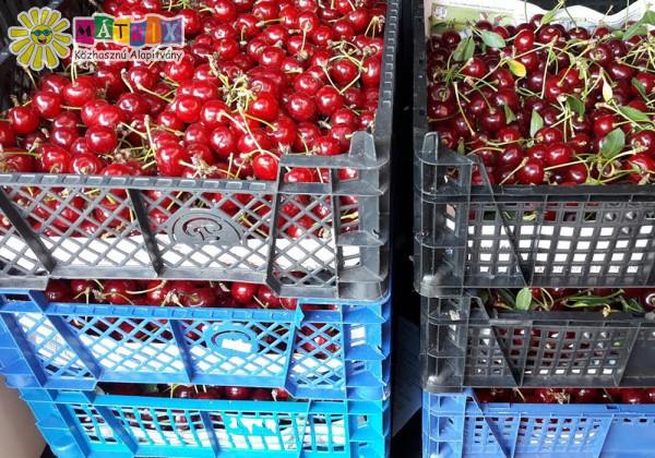 Gyümölcsosztás, családtámogatás