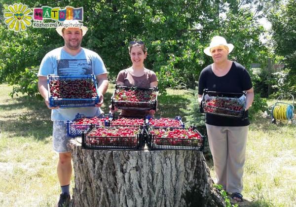Önkéntesek, gyümölcskommandó
