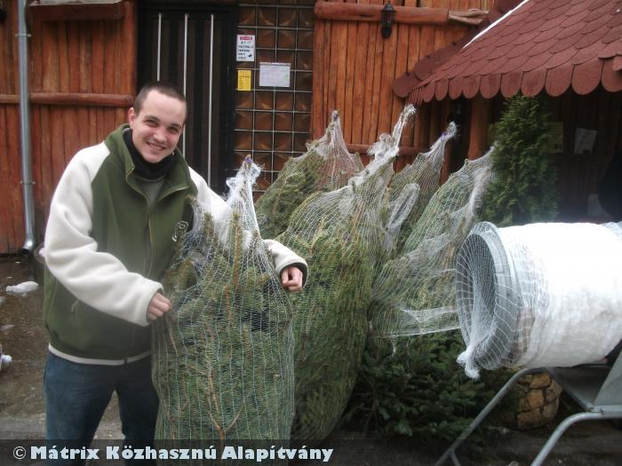 Fenyõfával támogattuk meg a rászoruló nagycsaládosokat (100 fenyõfát osztottunk karácsony elõtt)