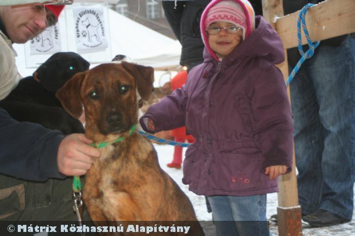 A Mátrix Alapítvány segíti más szervezetek, köztük az állatvédõk sikerességét is
