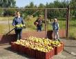Almát szedtünk, kiosztottuk családosoknak